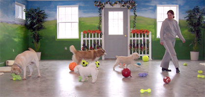 dog play room dream house for those busy households with hectic work schedules and the canine friend who is left behind why not choose option of having you dog entertained plainsview country kennels home the greg edgar school for dogs llc